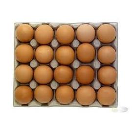 Słowik jaja XL 20 szt.