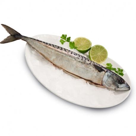 Makrela świeża