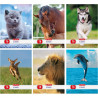 HERLITZ ANIMALS ZESZYT A5/16K W KRATKĘ MIĘKKA OPRAWA